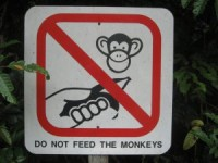 Don't feed the monkeys 3 ways to help people solve their own problems